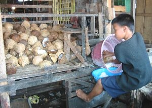 Coconut production in Samar